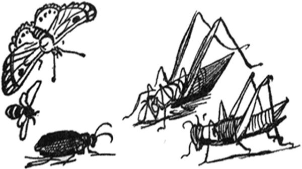 Grasshopper, butterfly, beetle and bee