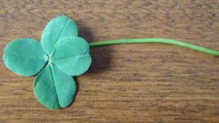 A Four Leafed Clover