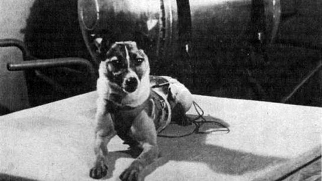 first animal in space laika - photo #1