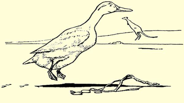 Duck Jumping