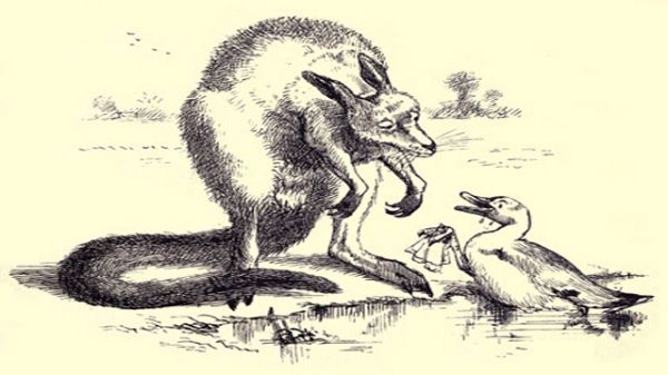 Duck Talking To Kangaroo
