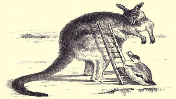 Duck Climbing Ladder Onto Kangaroo