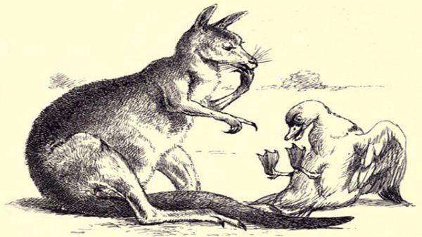 Kangaroo Pointing At Duck's Feet