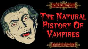 The Natural History Of Vampires