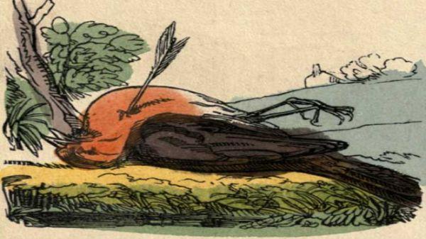 Cock Robin Lying Dead